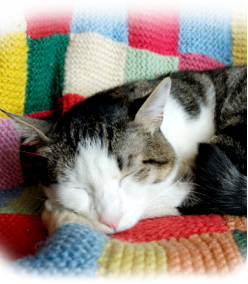 image of cat on blanket