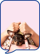 image of small dog in handbag